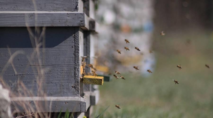 Méhek hazafelé